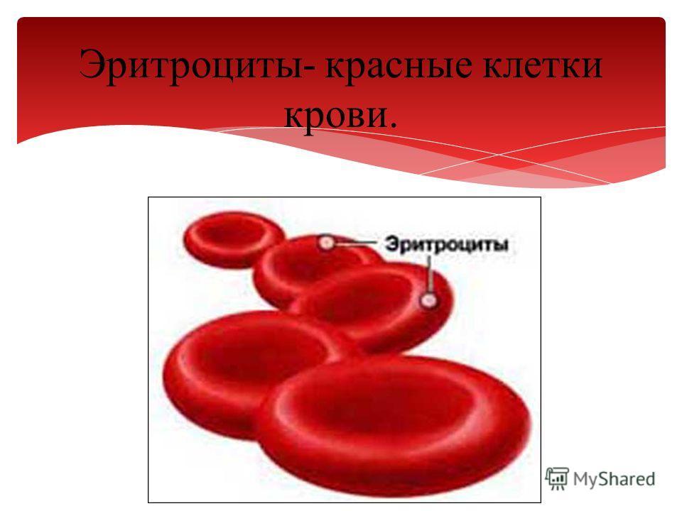 Эритроциты- красные клетки крови.