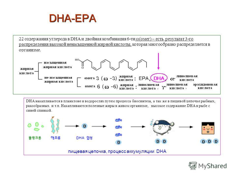 22 содержания углерода в DHA и двойная комбинация 6-ти ω(омег) – есть результат 3-го распределения высокой ненасыщенной жирной кислоты, которая многообразно распределяется в организме. пищевая цепочка, процесс аккумуляции DHA DHA накапливается в план