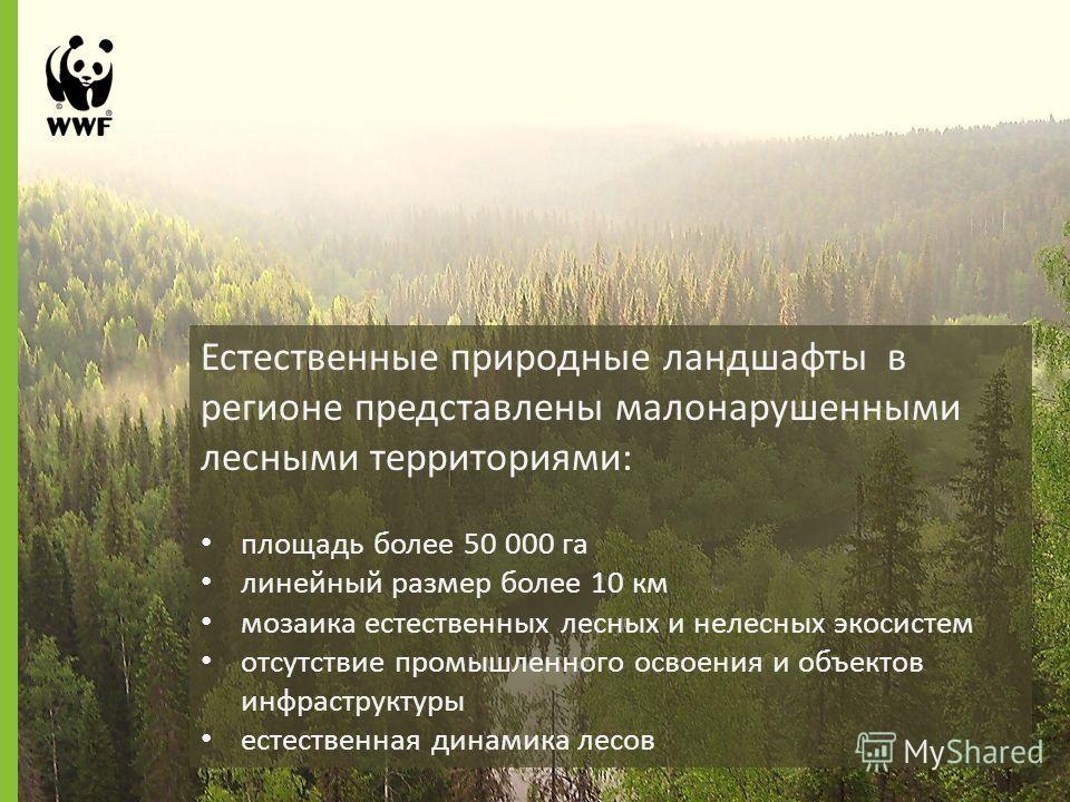 Естественные природные ландшафты в регионе представлены малонарушенными лесными территориями: площадь более 50 000 га линейный размер более 10 км мозаика естественных лесных и нелесных экосистем отсутствие промышленного освоения и объектов инфраструк