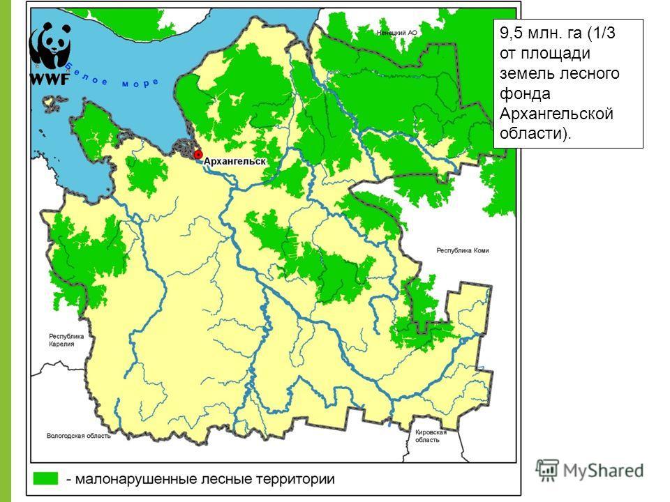 9,5 млн. га (1/3 от площади земель лесного фонда Архангельской области).