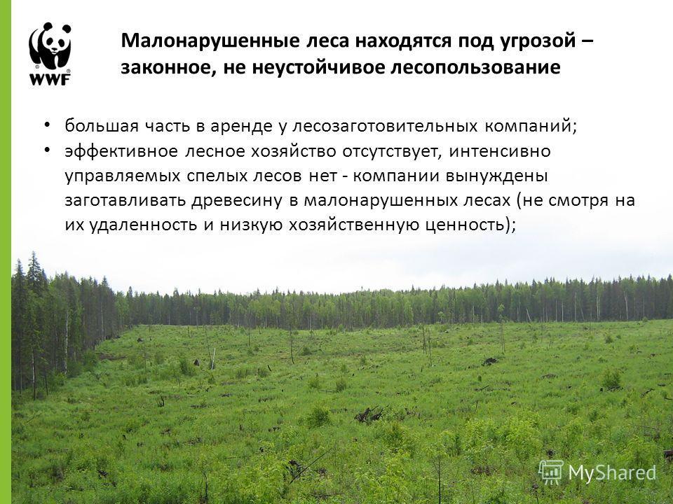 большая часть в аренде у лесозаготовительных компаний; эффективное лесное хозяйство отсутствует, интенсивно управляемых спелых лесов нет - компании вынуждены заготавливать древесину в малонарушенных лесах (не смотря на их удаленность и низкую хозяйст