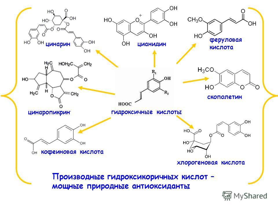 кофеиновая кислота хлорогеновая кислота скополетин феруловая кислота цинаринцианидин цинаропикрин гидроксичные кислоты Производные гидроксикоричных кислот – мощные природные антиоксиданты