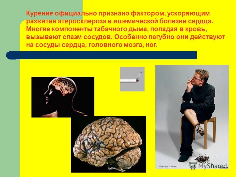 Курение официально признано фактором, ускоряющим развитие атеросклероза и ишемической болезни сердца. Многие компоненты табачного дыма, попадая в кровь, вызывают спазм сосудов. Особенно пагубно они действуют на сосуды сердца, головного мозга, ног.