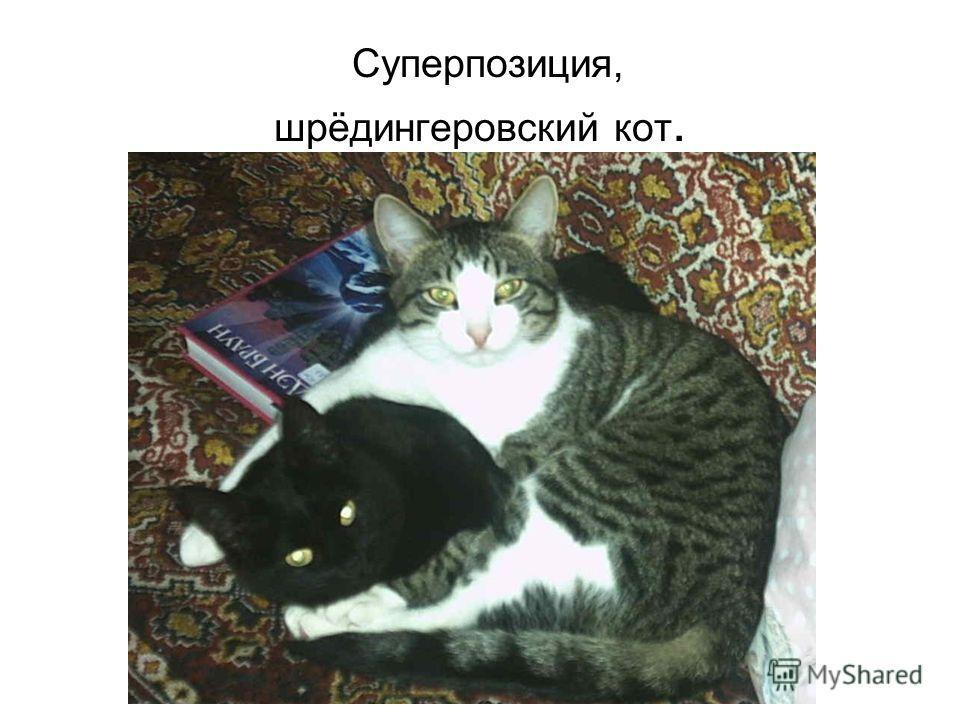 Суперпозиция, шрёдингеровский кот.