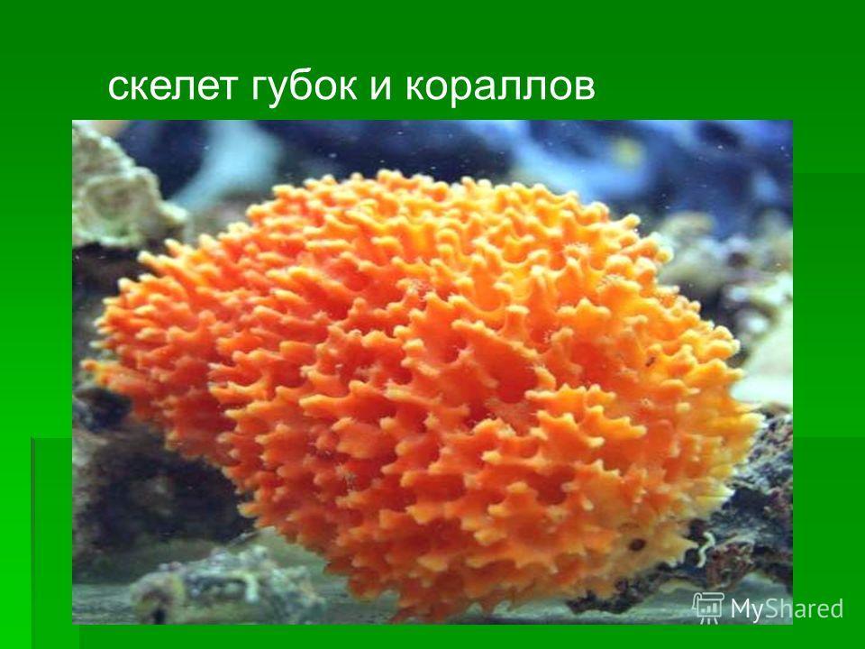 скелет губок и кораллов