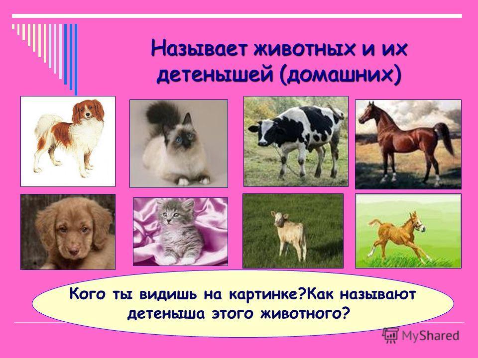 Называет животных и их детенышей (диких) Кого ты видишь на картинке?Как называют детеныша этого животного?
