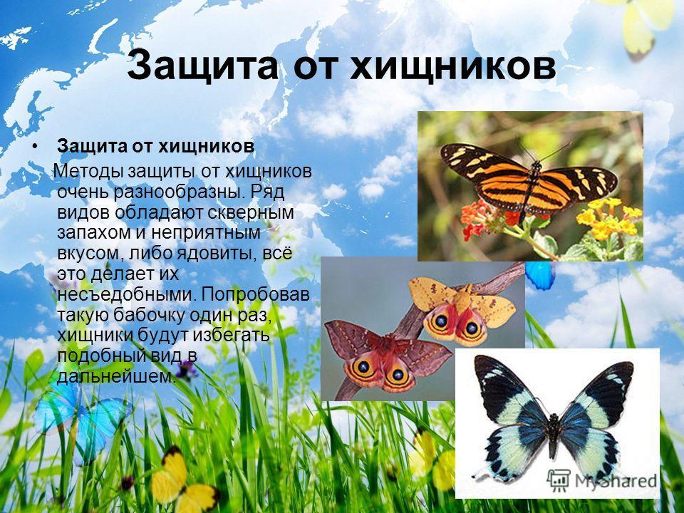 Защита от хищников Методы защиты от хищников очень разнообразны. Ряд видов обладают скверным запахом и неприятным вкусом, либо ядовиты, всё это делает их несъедобными. Попробовав такую бабочку один раз, хищники будут избегать подобный вид в дальнейше