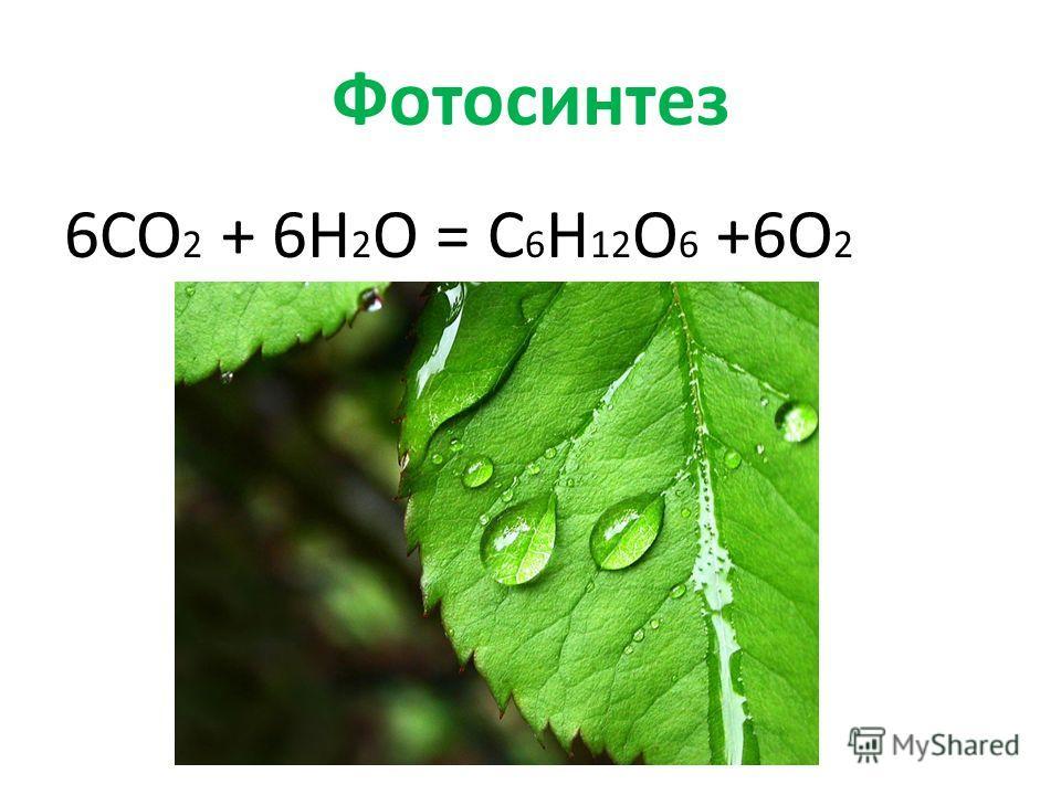 Фотосинтез 6CO 2 + 6H 2 O = C 6 H 12 O 6 +6O 2