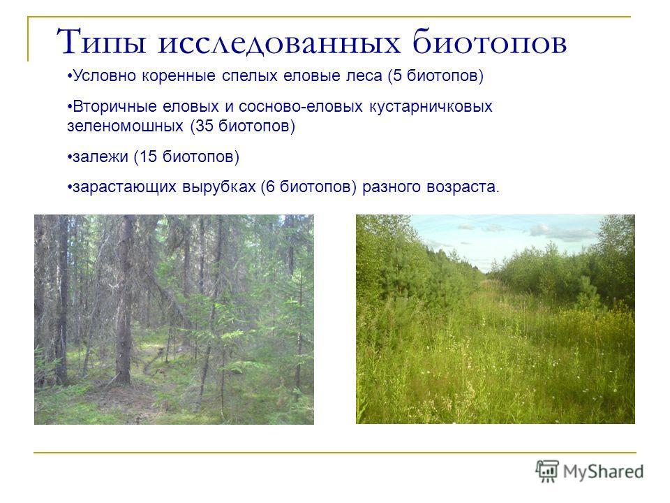 Типы исследованных биотопов Условно коренные спелых еловые леса (5 биотопов) Вторичные еловых и сосново-еловых кустарничковых зеленомошных (35 биотопов) залежи (15 биотопов) зарастающих вырубках (6 биотопов) разного возраста.