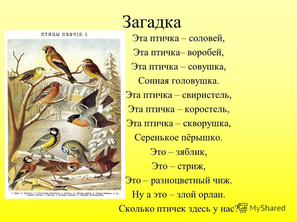 Загадка Эта птичка – соловей, Эта птичка– воробей, Эта птичка – совушка, Сонная головушка. Эта птичка – свиристель, Эта птичка – коростель, Эта птичка – скворушка, Серенькое пёрышко. Это – зяблик, Это – стриж, Это – разноцветный чиж. Ну а это – злой