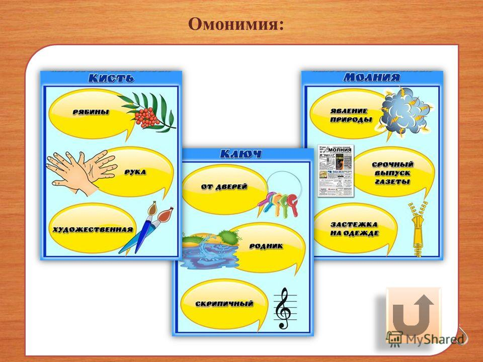 Омонимия: