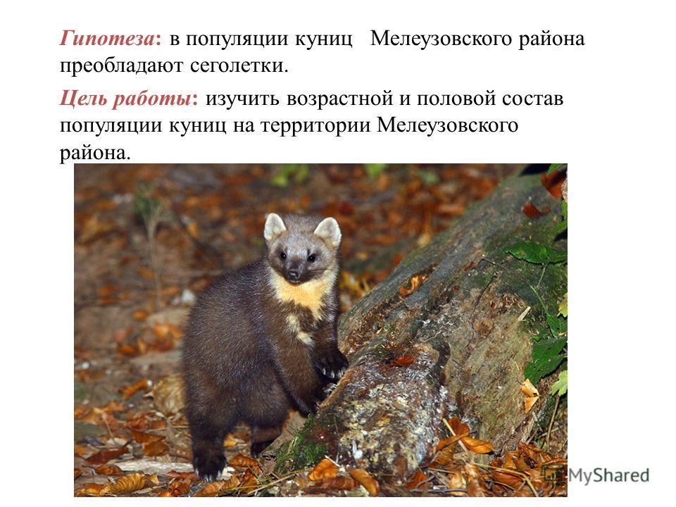 Гипотеза: в популяции куниц Мелеузовского района преобладают сеголетки. Цель работы: изучить возрастной и половой состав популяции куниц на территории Мелеузовского района.