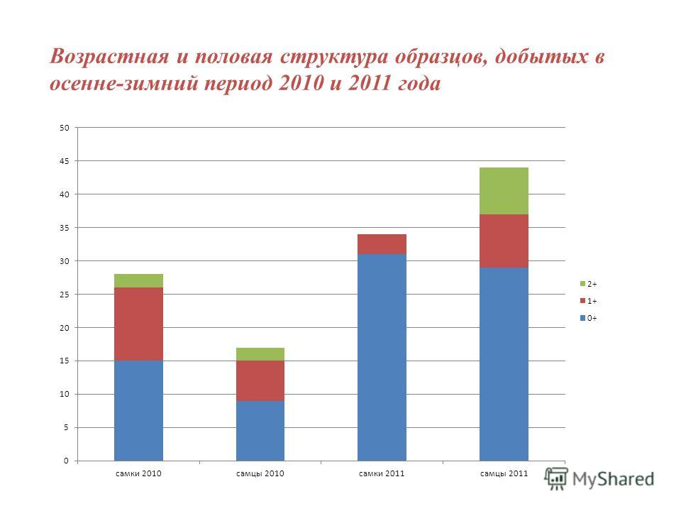 Возрастная и половая структура образцов, добытых в осенне-зимний период 2010 и 2011 года