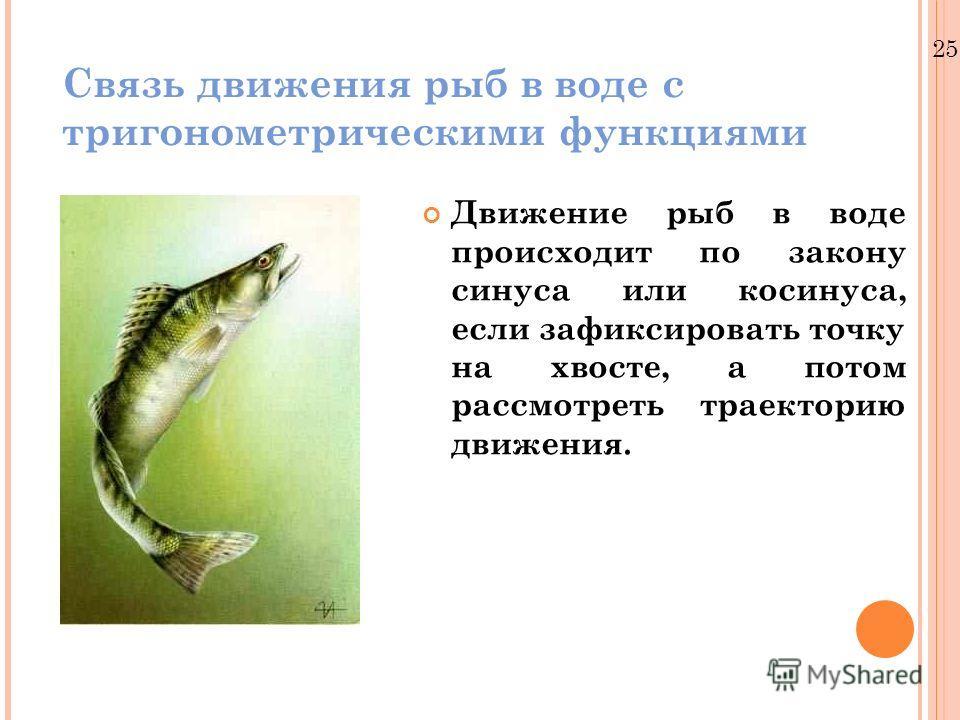 25.12.10 Связь движения рыб в воде с тригонометрическими функциями Движение рыб в воде происходит по закону синуса или косинуса, если зафиксировать точку на хвосте, а потом рассмотреть траекторию движения.