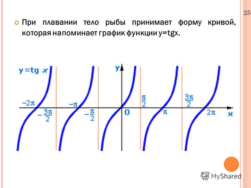 25.12.10 При плавании тело рыбы принимает форму кривой, которая напоминает график функции y=tgx.