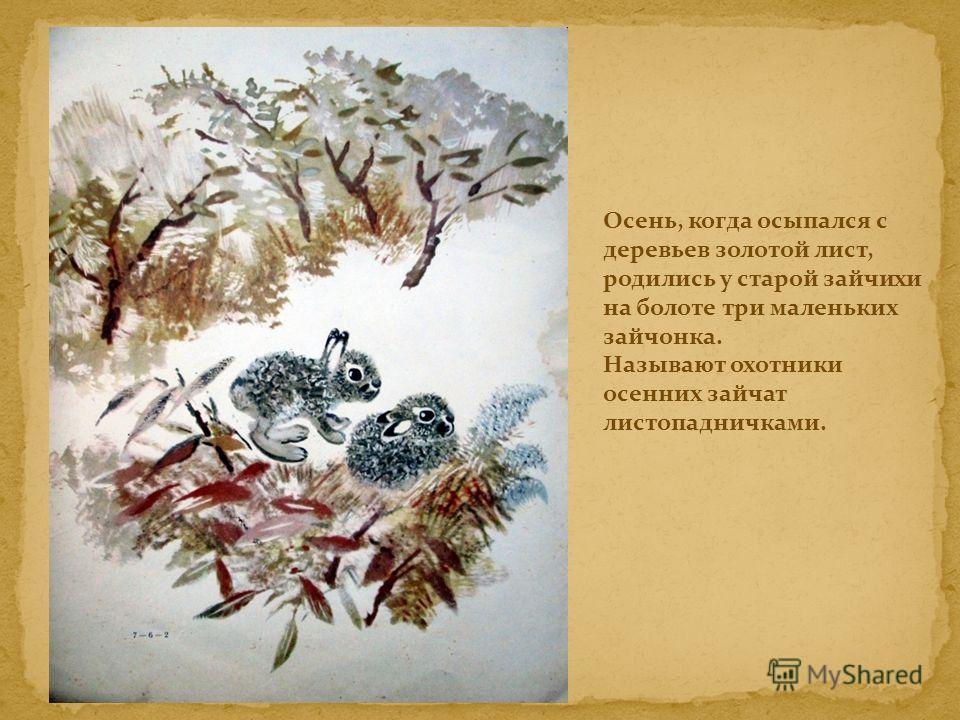 Осень, когда осыпался с деревьев золотой лист, родились у старой зайчихи на болоте три маленьких зайчонка. Называют охотники осенних зайчат листопадничками.