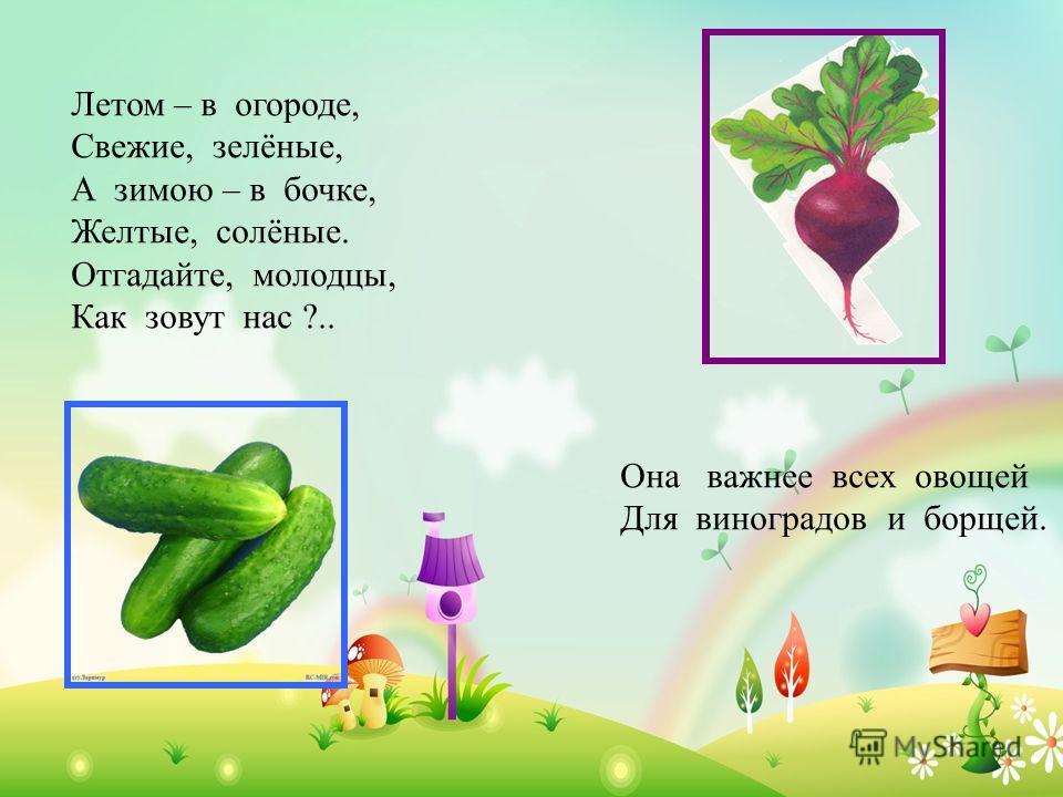 Летом – в огороде, Свежие, зелёные, А зимою – в бочке, Желтые, солёные. Отгадайте, молодцы, Как зовут нас ?.. Она важнее всех овощей Для виноградов и борщей.