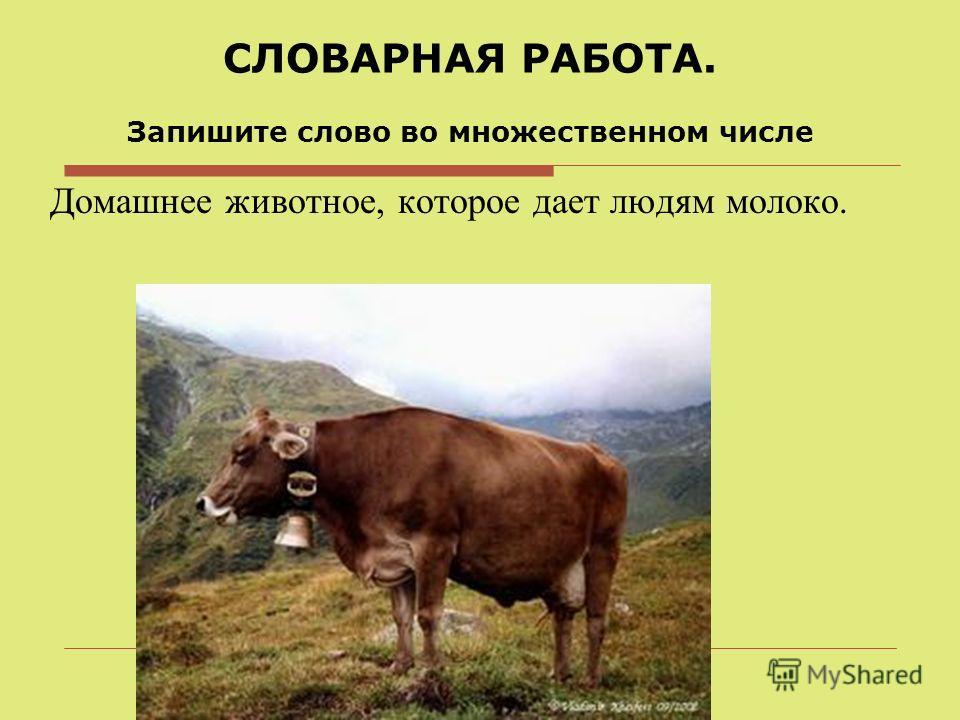 СЛОВАРНАЯ РАБОТА. Запишите слово во множественном числе Домашнее животное, которое дает людям молоко.