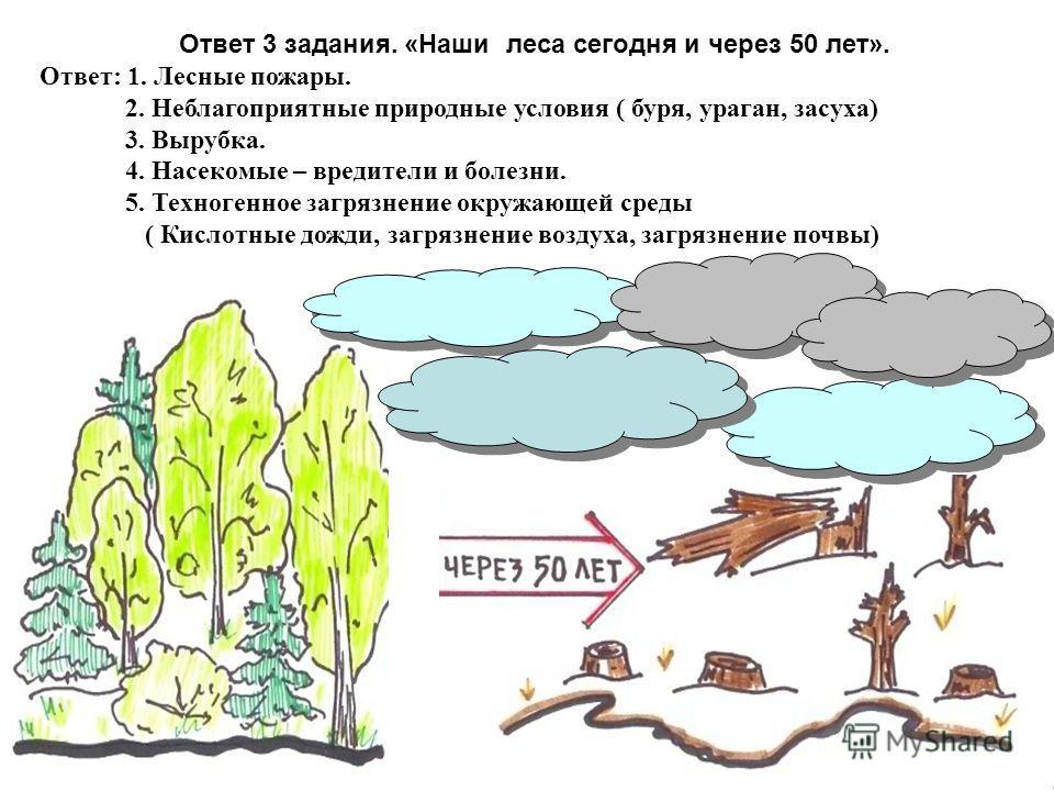Ответ 3 задания. «Наши леса сегодня и через 50 лет». Ответ: 1. Лесные пожары. 2. Неблагоприятные природные условия ( буря, ураган, засуха) 3. Вырубка. 4. Насекомые – вредители и болезни. 5. Техногенное загрязнение окружающей среды ( Кислотные дожди,