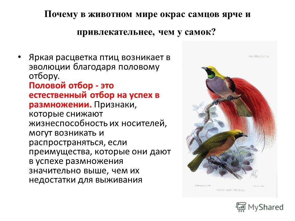 Почему в животном мире окрас самцов ярче и привлекательнее, чем у самок? Яркая расцветка птиц возникает в эволюции благодаря половому отбору. Половой отбор - это естественный отбор на успех в размножении. Признаки, которые снижают жизнеспособность их