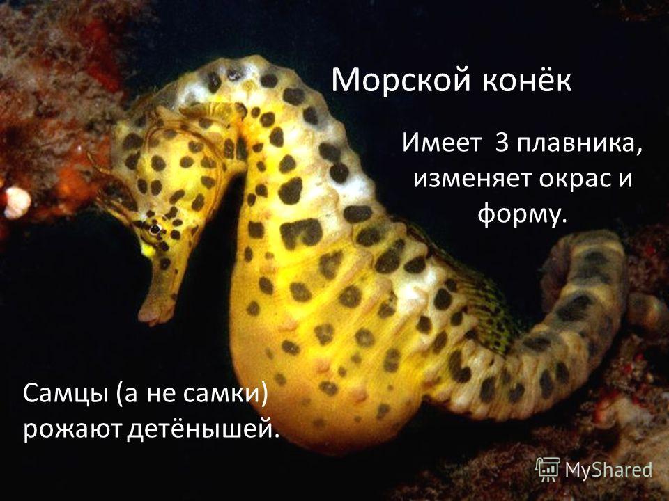Морской конёк Самцы (а не самки) рожают детёнышей. Имеет 3 плавника, изменяет окрас и форму.