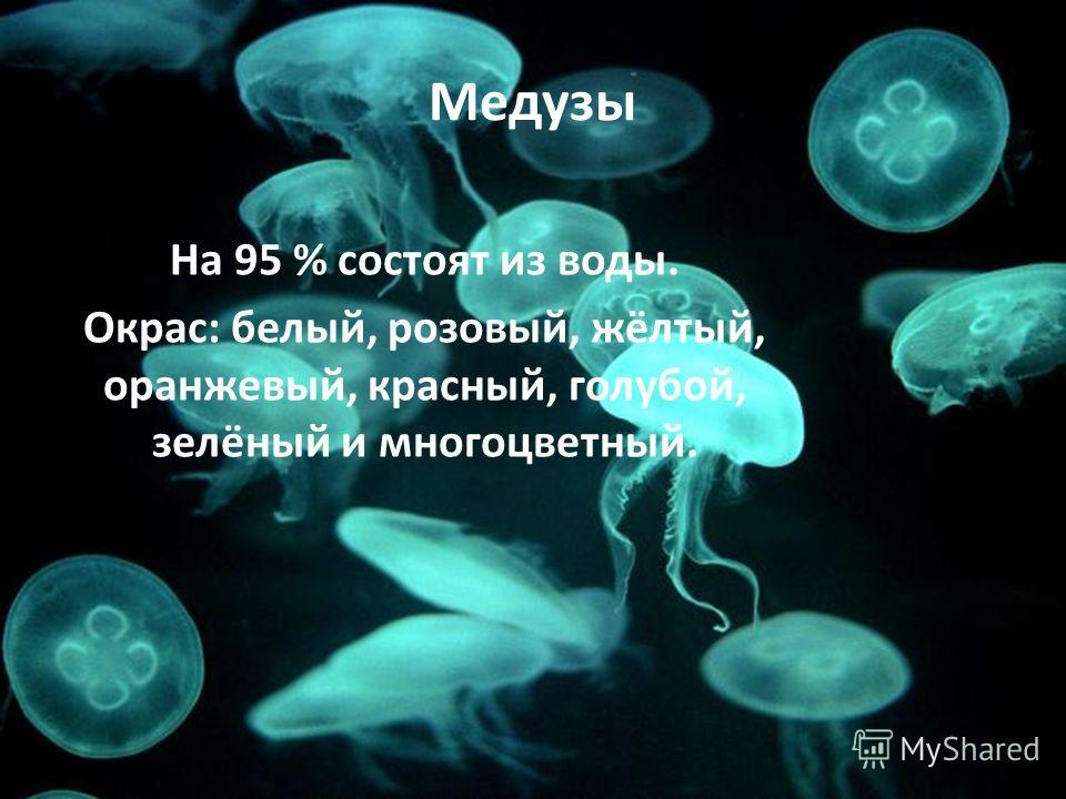 Медузы На 95 % состоят из воды. Окрас: белый, розовый, жёлтый, оранжевый, красный, голубой, зелёный и многоцветный.