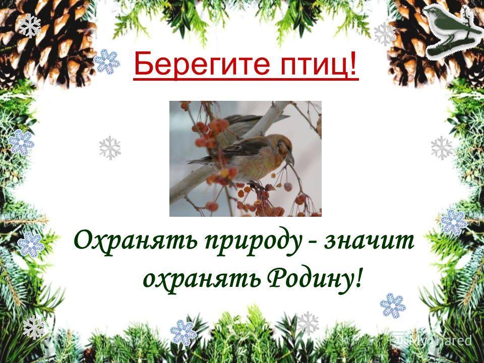 Клесты. На занесённых снегом ветвях ели ползают, кувыркаются, висят вверх ногами небольшие красноватые и зеленоватые птицы. Своими крепкими перекрещенными клювами они достают семена из жёлтых еловых шишек. Это клесты. Они не боятся ни вьюги, ни мороз