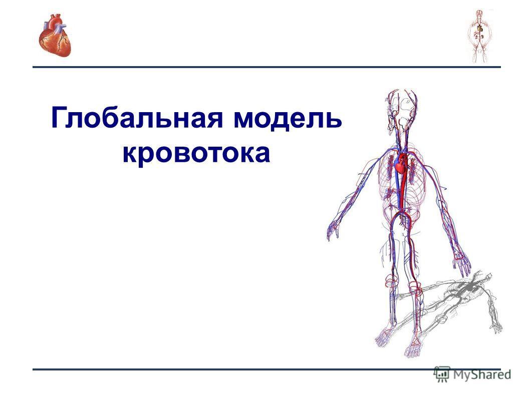 3 Глобальная модель кровотока