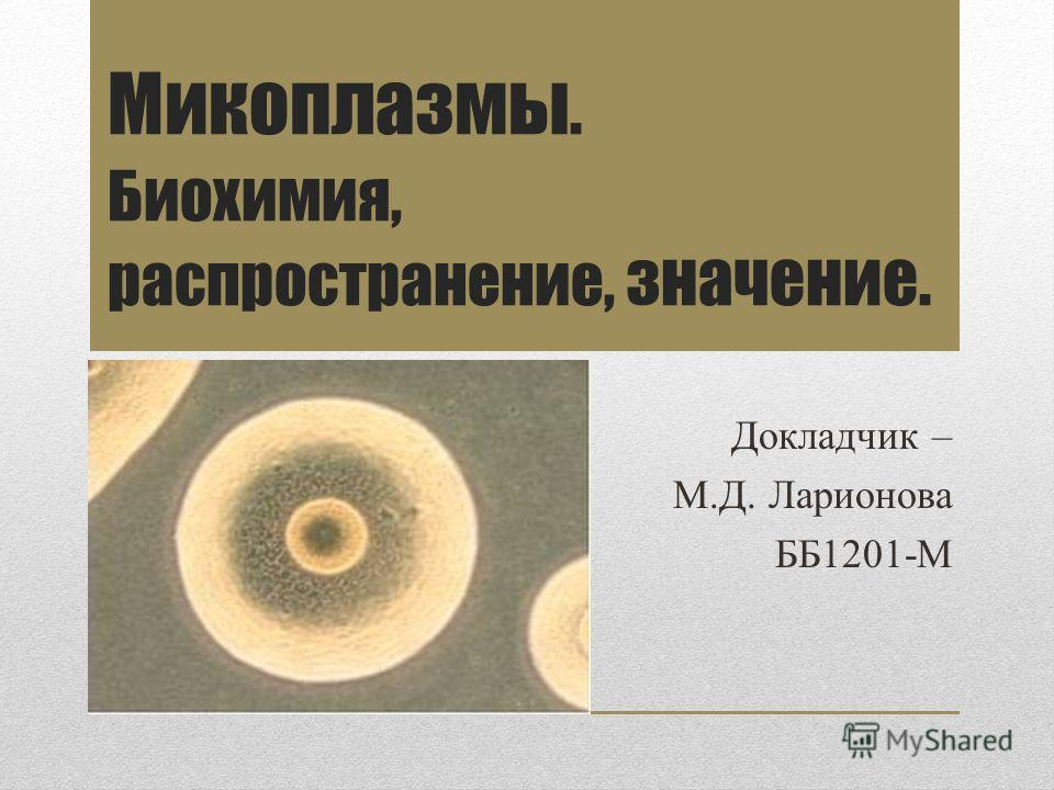 Микоплазмы. Биохимия, распространение, значение. Докладчик – М.Д. Ларионова ББ1201-М