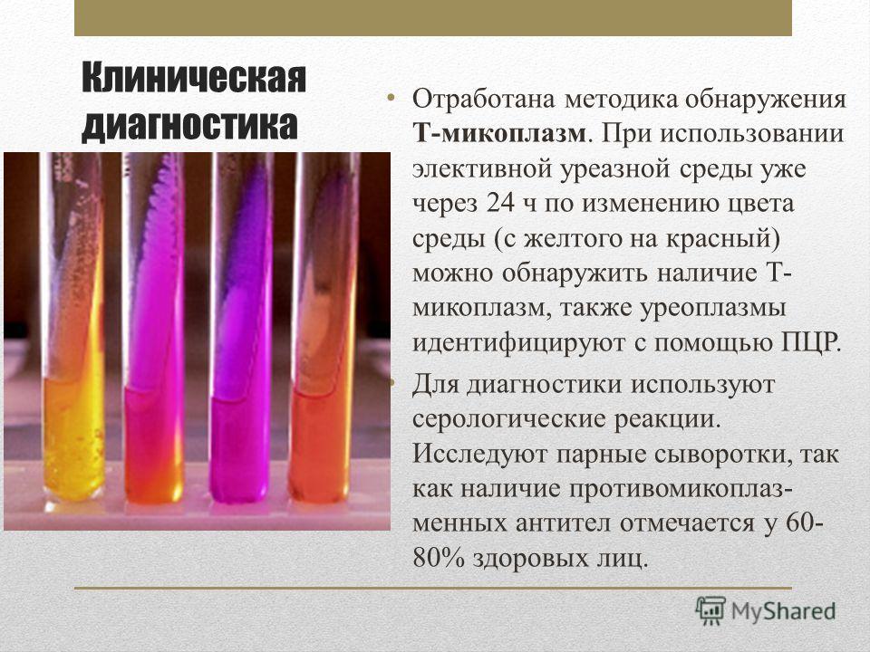 Клиническая диагностика Отработана методика обнаружения Т-микоплазм. При использовании элективной уреазной среды уже через 24 ч по изменению цвета среды (с желтого на красный) можно обнаружить наличие Т- микоплазм, также уреоплазмы идентифицируют с п