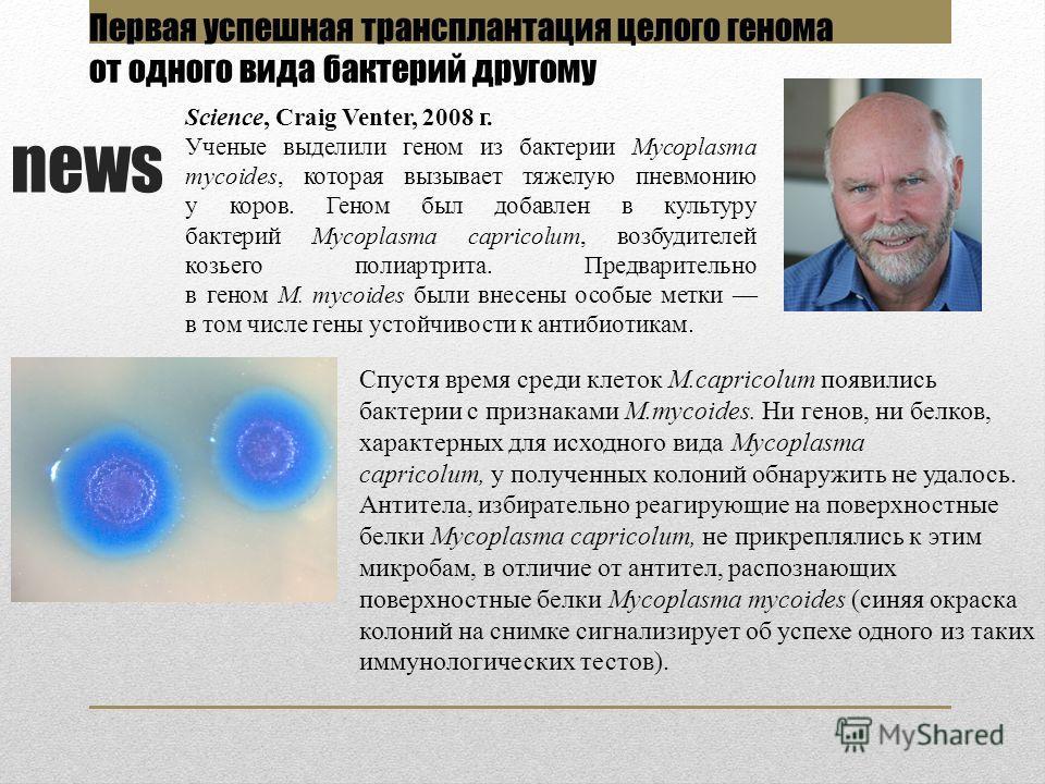 news Спустя время среди клеток M.capricolum появились бактерии с признаками M.mycoides. Ни генов, ни белков, характерных для исходного вида Mycoplasma capricolum, у полученных колоний обнаружить не удалось. Антитела, избирательно реагирующие на повер