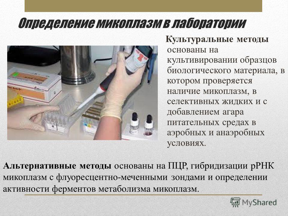 Определение микоплазм в лаборатории Культуральные методы основаны на культивировании образцов биологического материала, в котором проверяется наличие микоплазм, в селективных жидких и с добавлением агара питательных средах в аэробных и анаэробных усл
