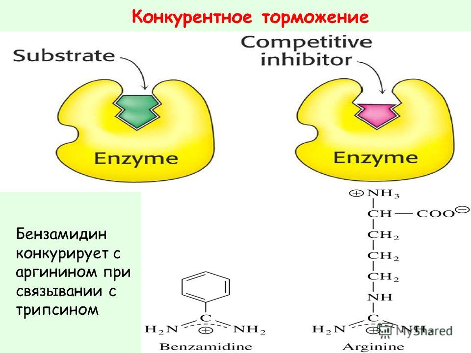 Конкурентное торможение Бензамидин конкурирует с аргинином при связывании с трипсином