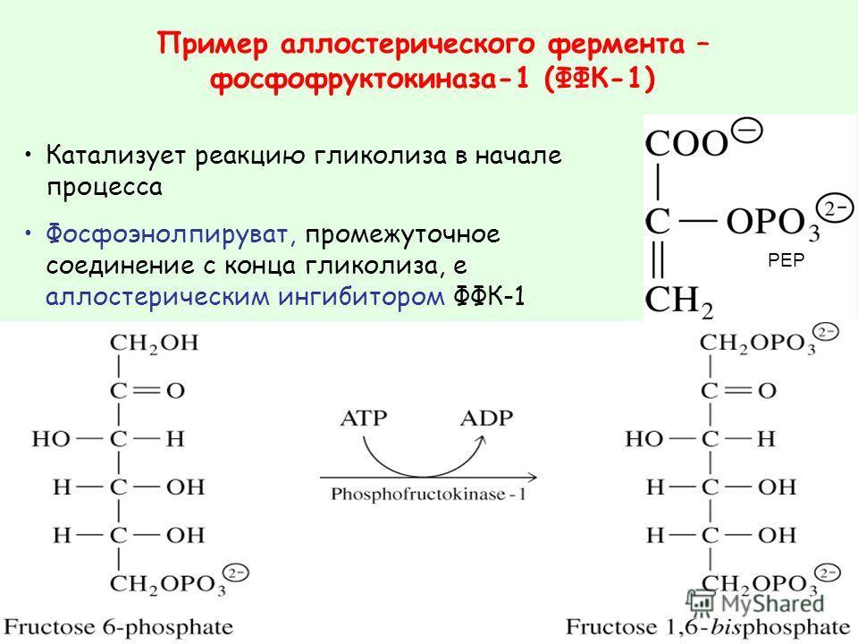 Катализует реакцию гликолиза в начале процесса Фосфоэнолпируват, промежуточное соединение с конца гликолиза, е аллостерическим ингибитором ФФК-1 Пример аллостерического фермента – фосфофруктокиназа-1 (ФФК-1) PEP