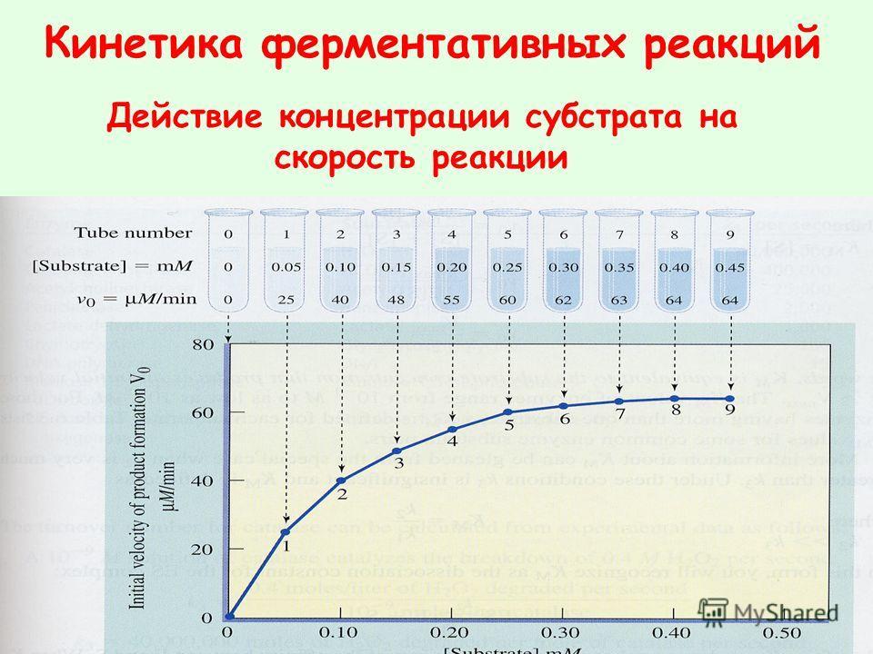 Кинетика ферментативных реакций Действие концентрации субстрата на скорость реакции