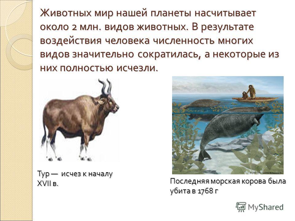Животных мир нашей планеты насчитывает около 2 млн. видов животных. В результате воздействия человека численность многих видов значительно сократилась, а некоторые из них полностью исчезли. Тур исчез к началу XVII в. Последняя морская корова была уби