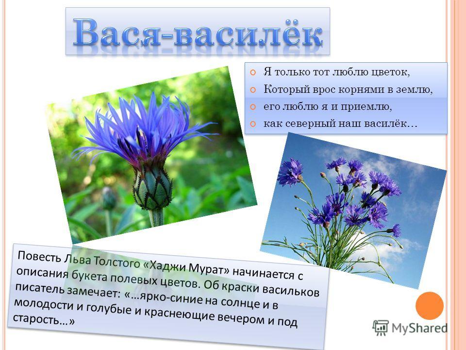 Я только тот люблю цветок, Который врос корнями в землю, его люблю я и приемлю, как северный наш василёк… Я только тот люблю цветок, Который врос корнями в землю, его люблю я и приемлю, как северный наш василёк…