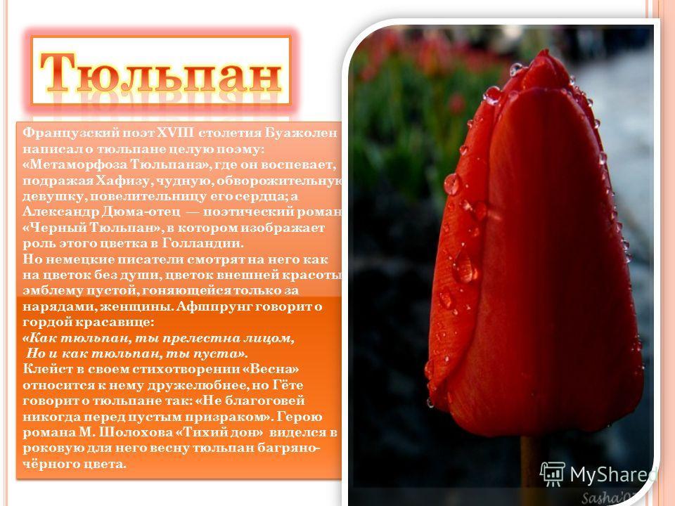 Французский поэт XVIII столетия Буажолен написал о тюльпане целую поэму: «Метаморфоза Тюльпана», где он воспевает, подражая Хафизу, чудную, обворожительную девушку, повелительницу его сердца; а Александр Дюма-отец поэтический роман «Черный Тюльпан»,