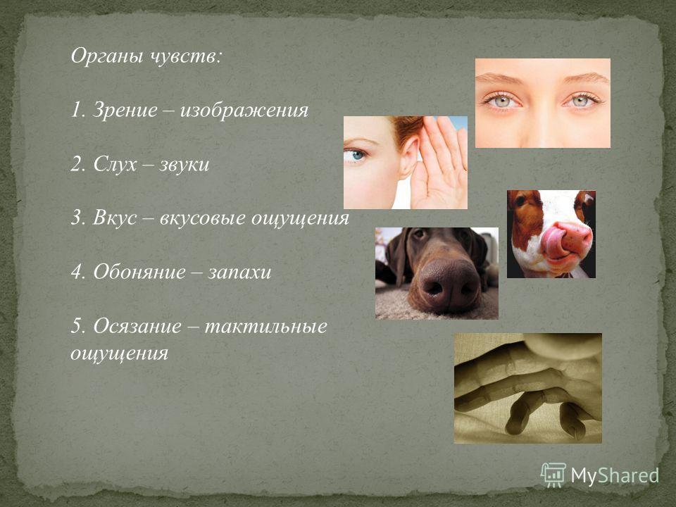 Органы чувств: 1. Зрение – изображения 2. Слух – звуки 3. Вкус – вкусовые ощущения 4. Обоняние – запахи 5. Осязание – тактильные ощущения