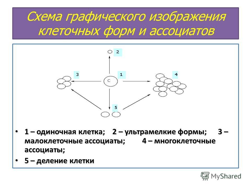 Схема графического изображения клеточных форм и ассоциатов 1 – одиночная клетка; 2 – ультрамелкие формы; 3 – малоклеточные ассоциаты; 4 – многоклеточные ассоциаты; 1 – одиночная клетка; 2 – ультрамелкие формы; 3 – малоклеточные ассоциаты; 4 – многокл