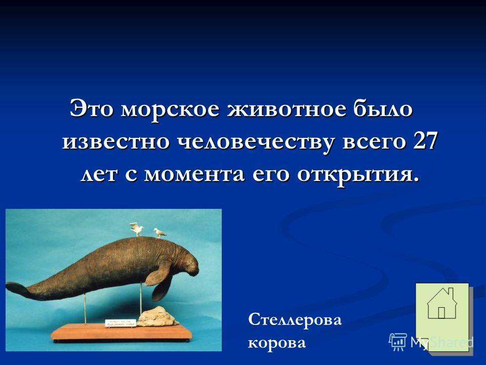 Это морское животное было известно человечеству всего 27 лет с момента его открытия. Стеллерова корова