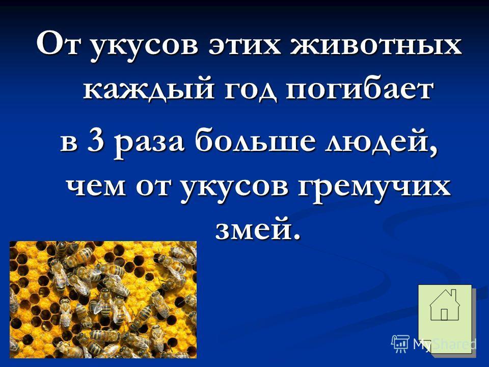 От укусов этих животных каждый год погибает в 3 раза больше людей, чем от укусов гремучих змей.