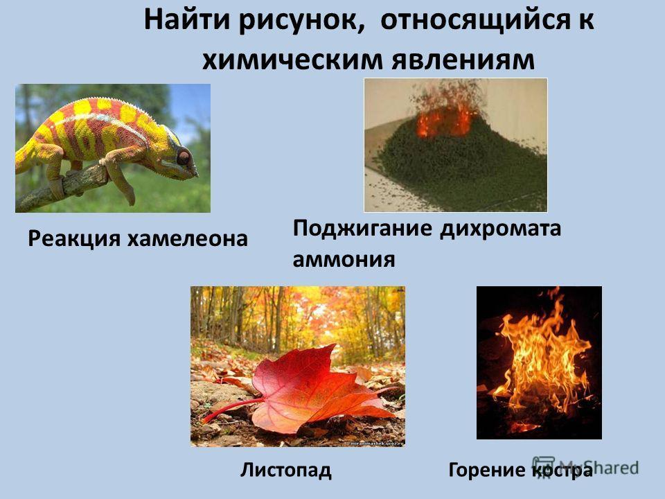 Найти рисунок, относящийся к химическим явлениям Поджигание дихромата аммония Реакция хамелеона ЛистопадГорение костра