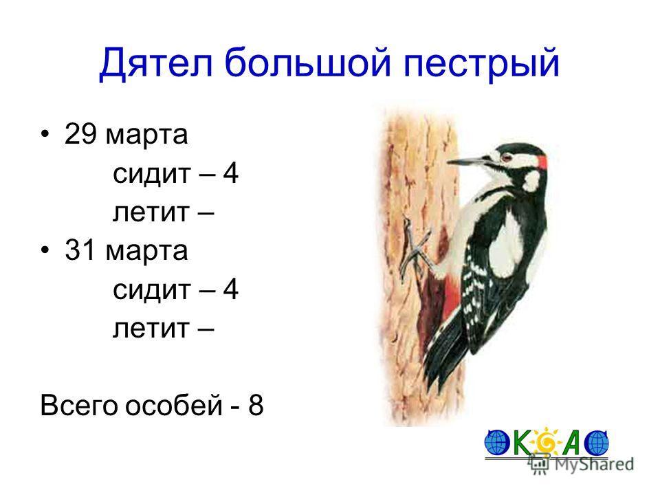 Дятел большой пестрый 29 марта сидит – 4 летит – 31 марта сидит – 4 летит – Всего особей - 8