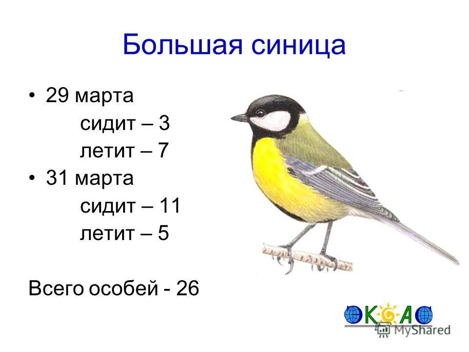 Большая синица 29 марта сидит – 3 летит – 7 31 марта сидит – 11 летит – 5 Всего особей - 26