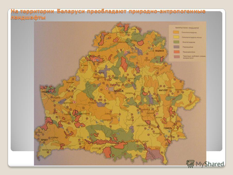 На территории Беларуси преобладают природно-антропогенные ландшафты