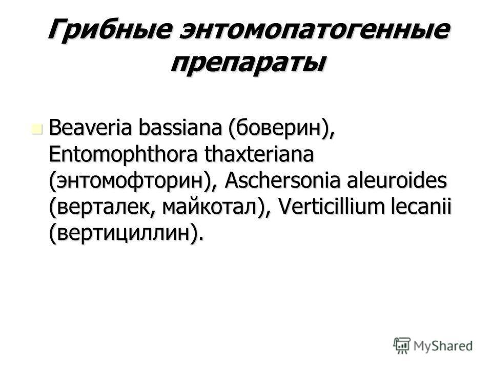 Грибные энтомопатогенные препараты Beaveria bassiana (боверин), Entomophthora thaxteriana (энтомофторин), Aschersonia aleuroides (верталек, майкотал), Verticillium lecanii (вертициллин). Beaveria bassiana (боверин), Entomophthora thaxteriana (энтомоф