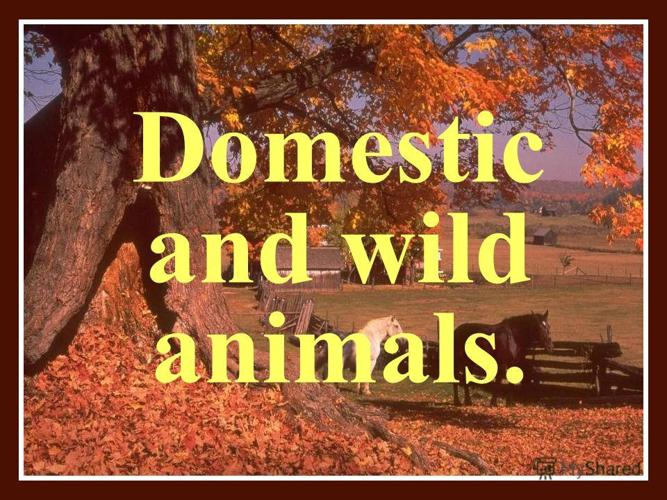 Domestic and wild animals.