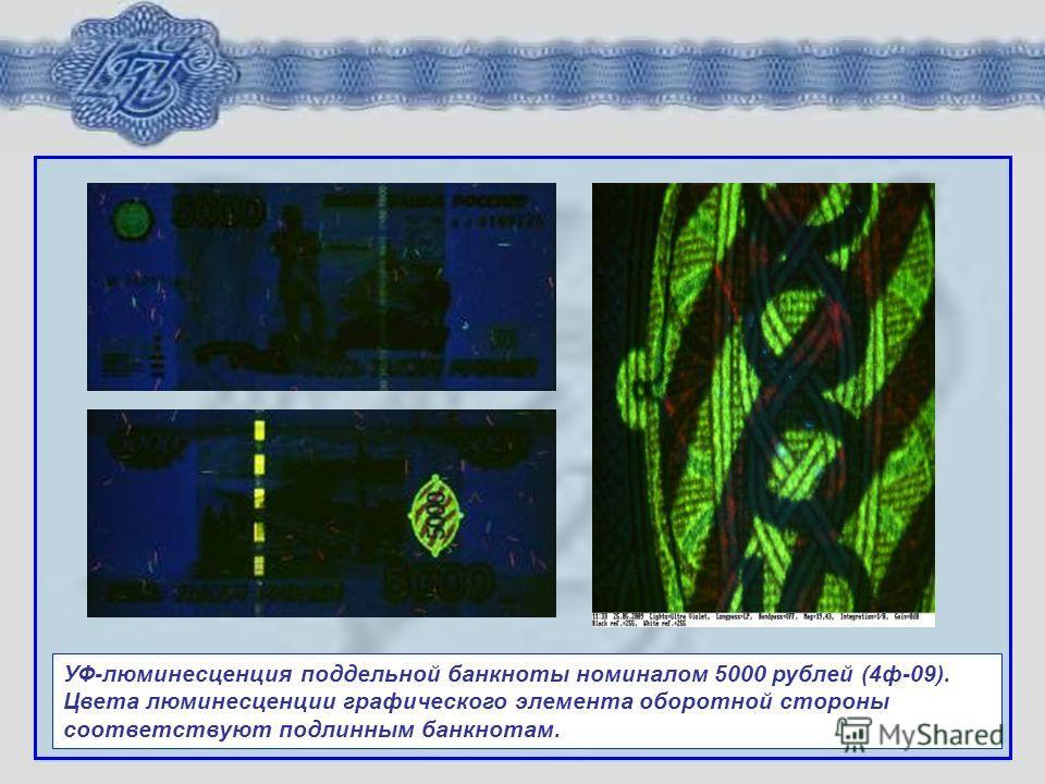 УФ-люминесценция поддельной банкноты номиналом 5000 рублей (4ф-09). Цвета люминесценции графического элемента оборотной стороны соответствуют подлинным банкнотам.