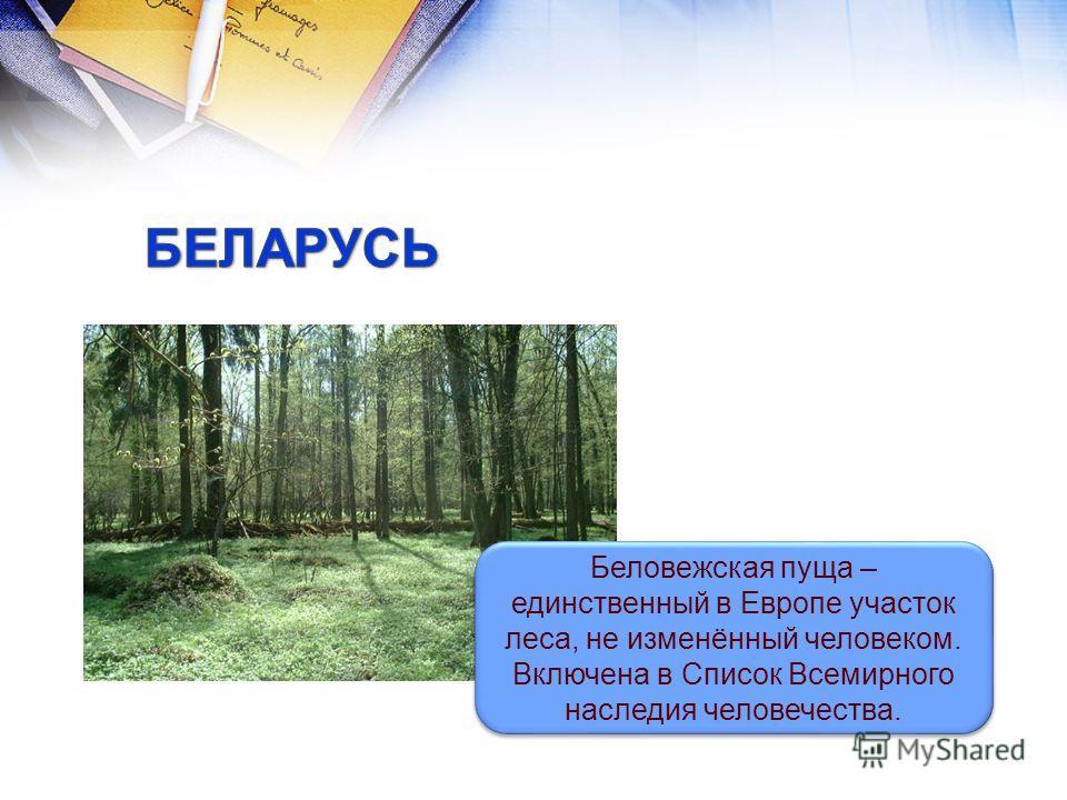 Беловежская пуща – единственный в Европе участок леса, не изменённый человеком. Включена в Список Всемирного наследия человечества. Беловежская пуща – единственный в Европе участок леса, не изменённый человеком. Включена в Список Всемирного наследия
